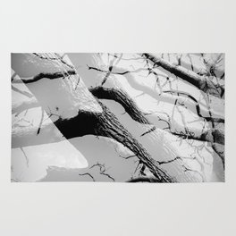 Tree Division in Mono Rug