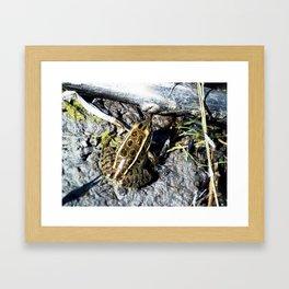 Froggy Fooooreeeeverrrrr! Framed Art Print