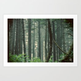 There Are Stories In The Woods Art Print