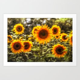 Sunflowers With Canvas Texture Art Print