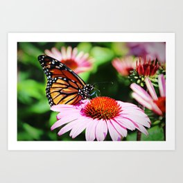 Butterfly from New Zealand Art Print