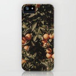Orange Citrus Fruit Tree iPhone Case