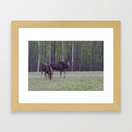 Moose Baby Framed Art Print