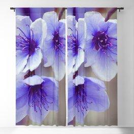 blu Blackout Curtain