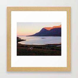 Seydisfjordur Sheep Framed Art Print