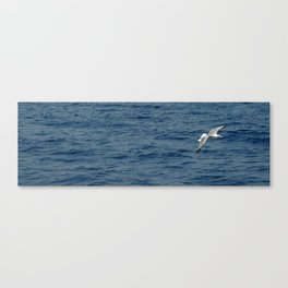Seagull in Croatia #1 Canvas Print