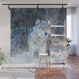 Grey Wolf in the Canadian Rocky Mountains Wall Mural