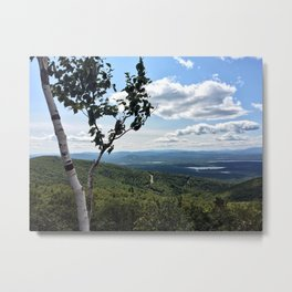 Mountaintop Birch (2) Metal Print