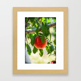 The Peach Framed Art Print