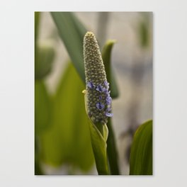 Tiny Purples Canvas Print