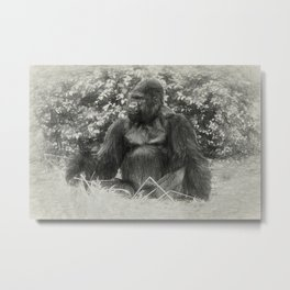 Male gorilla sitting on the ground Metal Print
