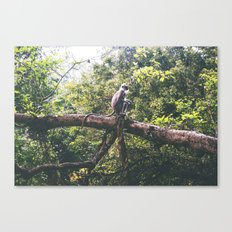 Sri Lankan Monkey Canvas Print