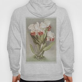 Reichenbachia: Orchids Illustrated and Described Hoody