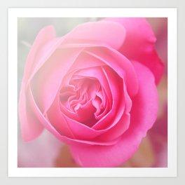 *Pinklight - Rose I Art Print