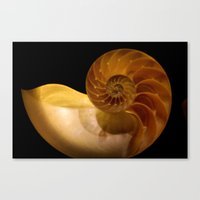 shell Canvas Prints featuring shell by littlesilversparks