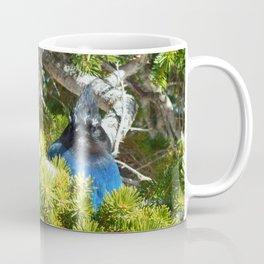 Cyanocitta stelleri Coffee Mug