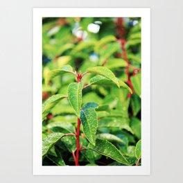 LEAVES SO GREEN Art Print