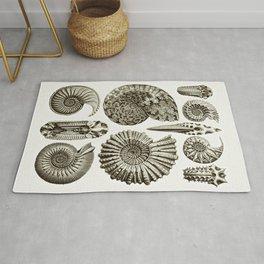 Ernst Haeckel Ammonitida Ammonite Rug
