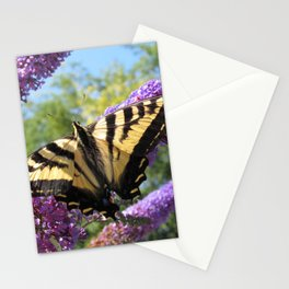 Tiger Swallowtail Stationery Cards