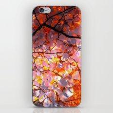 autumn tree VI iPhone & iPod Skin