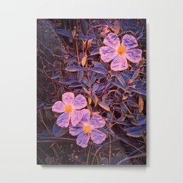 Wild rock rose flowers floral painting  Metal Print