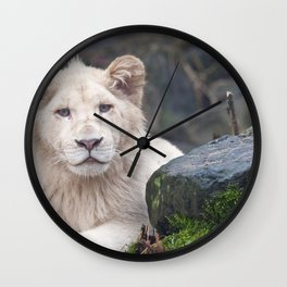Beautiful Adorable White Lion Cub Close Up Ultra HD Wall Clock