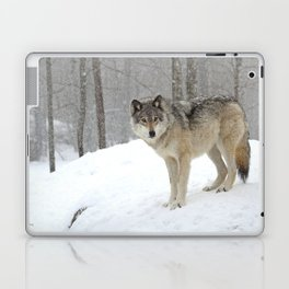 A lone wolf Laptop & iPad Skin