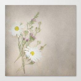 Pretty Daisy Canvas Print