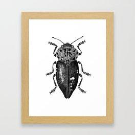Beetle 11 Framed Art Print