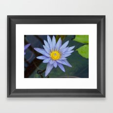 Water Lily Blue Framed Art Print