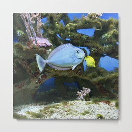 Sea Blue Fish Metal Print