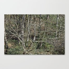 In the wild wood Canvas Print