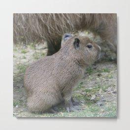 adorable capybara baby Metal Print