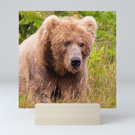 Brown Bear Kodiak Mini Art Print