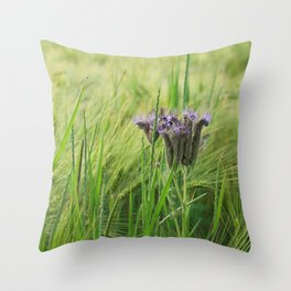 phacelia in a barley field Throw Pillow