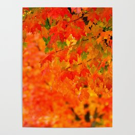 VIVID FALL LEAVES Poster
