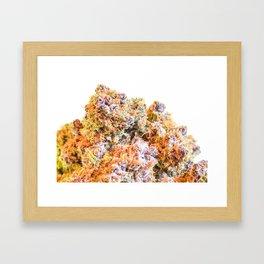 Purple Gorilla  Framed Art Print