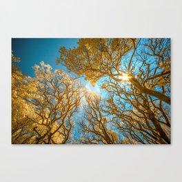 Morning Glory  Photography Canvas Print