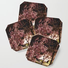 Weeping Cherry Blossoms Coaster