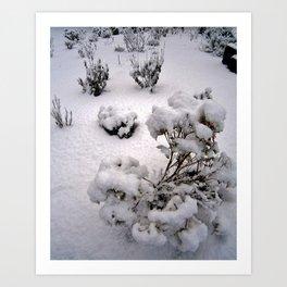 Snow Pods Art Print