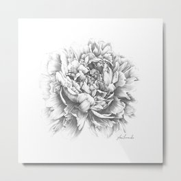 Peony In the Name of Love  Metal Print