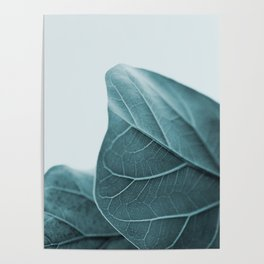 Teal Plant Leaves Poster
