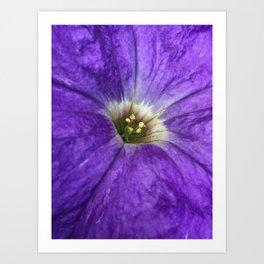 Purple Petunia Art Print