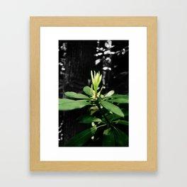 Laurel Bloom Framed Art Print