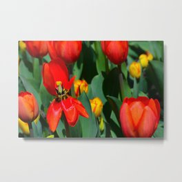 Bright Red Tulips Metal Print