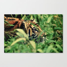 Stalking Canvas Print