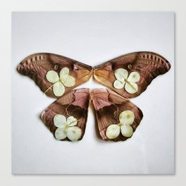 Moth with Yellow Flowers Canvas Print