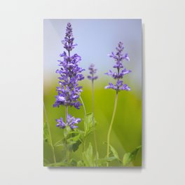 Sage Plant Summer Garden #decor #society6 #buyart Metal Print