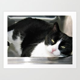 Cat in the sink Art Print