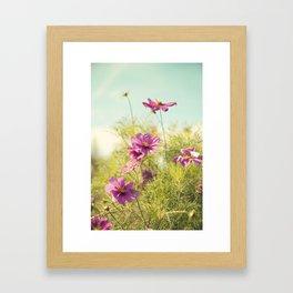 summer cosmos Framed Art Print